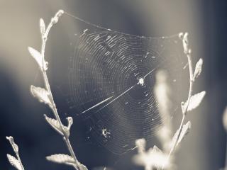 обои Осенняя паутинка на двух веточках фото