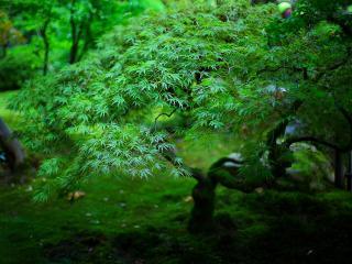 обои Японский сад Портленда фото