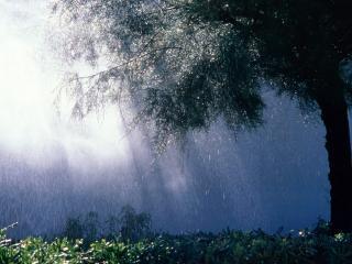 обои Дождливая погода фото