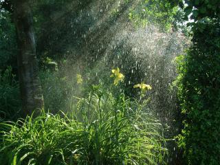 обои Дождливый лес фото