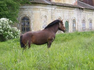 обои У старой церкви,   лошадь,   коричневая фото
