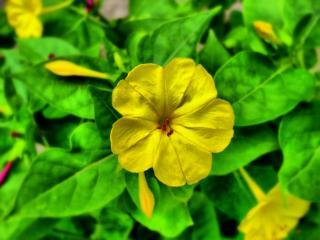 обои Желтый маленький цветок фото