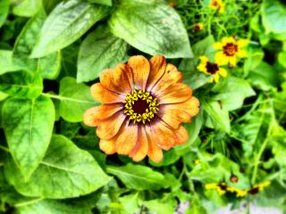 обои для рабочего стола: Цветок в саду
