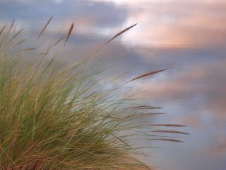 обои Растение на склоне у берега реки фото