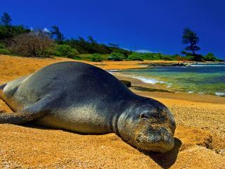 обои A Hawaiian Day at the Beach фото