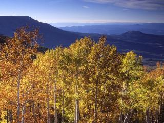 обои Grand Mesa in Autumn,   Colorado фото