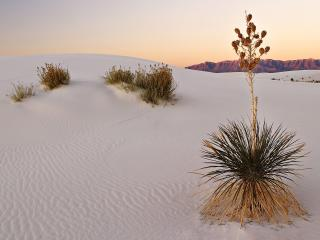 обои White Sands at Sunrise,   New Mexico фото