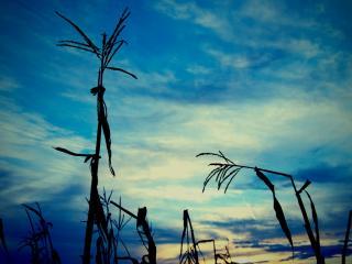 обои Погнутые ветром растения на фоне яркого неба фото