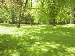 обои Зеленый парк в солнечный летний день фото