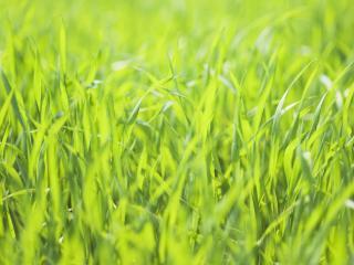 обои Сочная ярко-зеленая трава в жаркий день фото