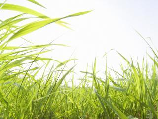 обои Взгляд из зарослей травы фото