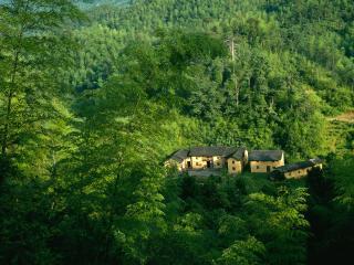 обои Домики в хвойном лесу фото