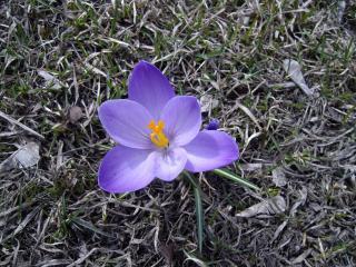 обои Весенний цветок фото