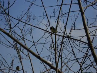 обои Птицы в зимнем лесу фото