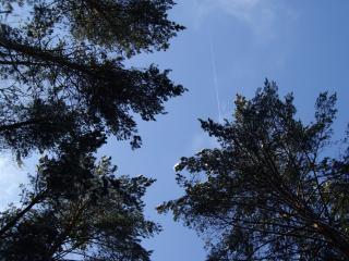 обои Небо в зимнем лесу фото