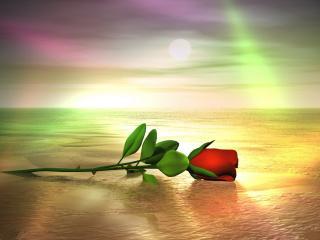 обои Алая роза печали фото