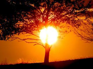 обои Дерево, освещенное солнцем фото