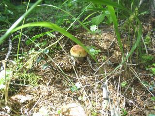 обои Первый гриб фото