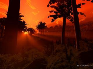 обои Огненный закат в тропическом лесу фото