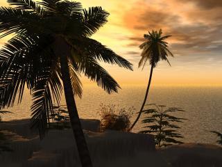 обои Пальмы на берегу моря фото