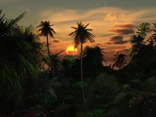 обои Тропический лес,   заход солнца фото