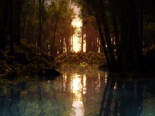 обои Пруд в густом лесу фото