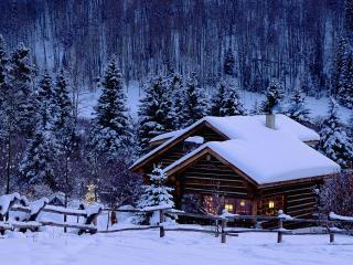 обои Зима в лесу фото