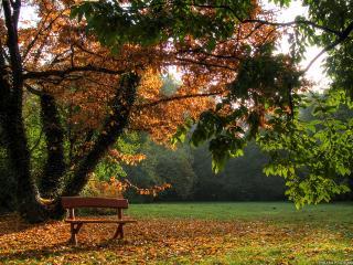 обои для рабочего стола: Пустая лавочка в осеннем парке