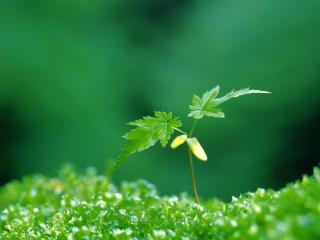 обои Хрупкое растение в одиночестве фото