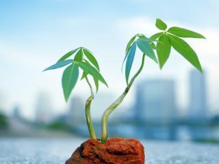 обои Смелое растение с городом на заднем плане фото