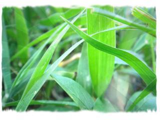 обои для рабочего стола: Заросли травинок разной ширины