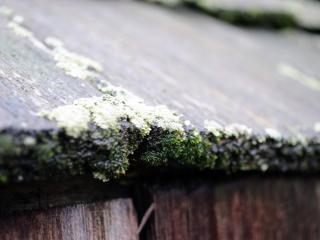 обои Плесень на деревяной крыше фото