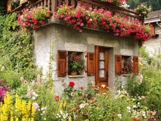 обои Colorful Garden фото