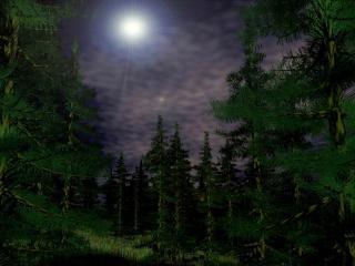 обои Магический лес фото