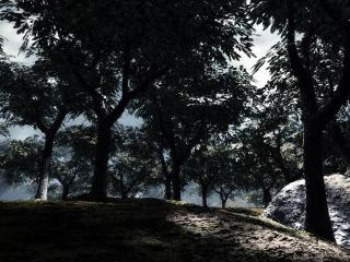 обои для рабочего стола: Утренний лес