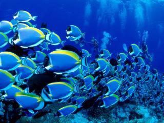 обои Необыкновенные рыбки фото