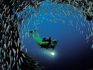 обои Дайвинг  с рыбками фото