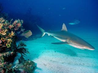 обои Акула в своей красе фото