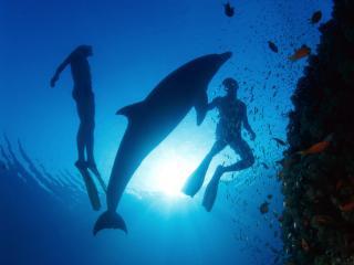 обои Дайвинг с дельфином фото