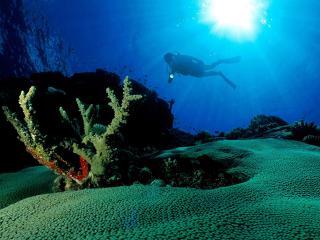 обои Дно океана фото