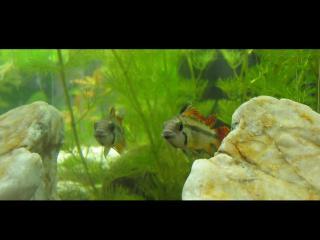 обои Рыбки на фоне камней фото