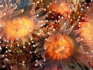 обои Красота под водой фото