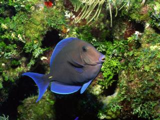 обои Фосфорная рыбка фото