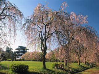 обои Castle Hirosaki,   Japan фото