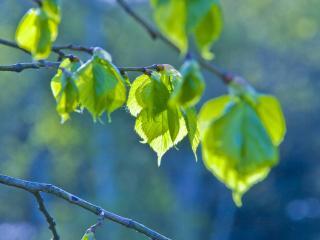 обои Зеленые листики фото