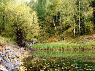 обои Лесной пруд осенью фото