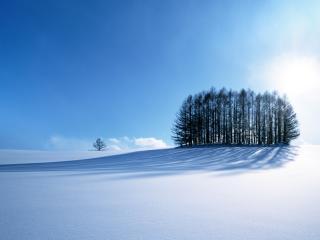 обои Снежное поле с деревьями фото