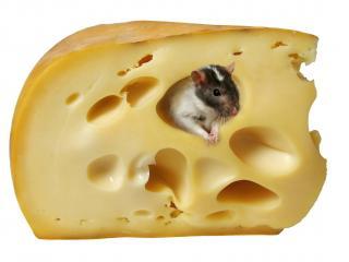 обои Мышка в сыре фото