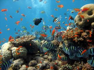 обои Морские рыбки фото