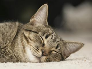 обои Спящий котяра фото